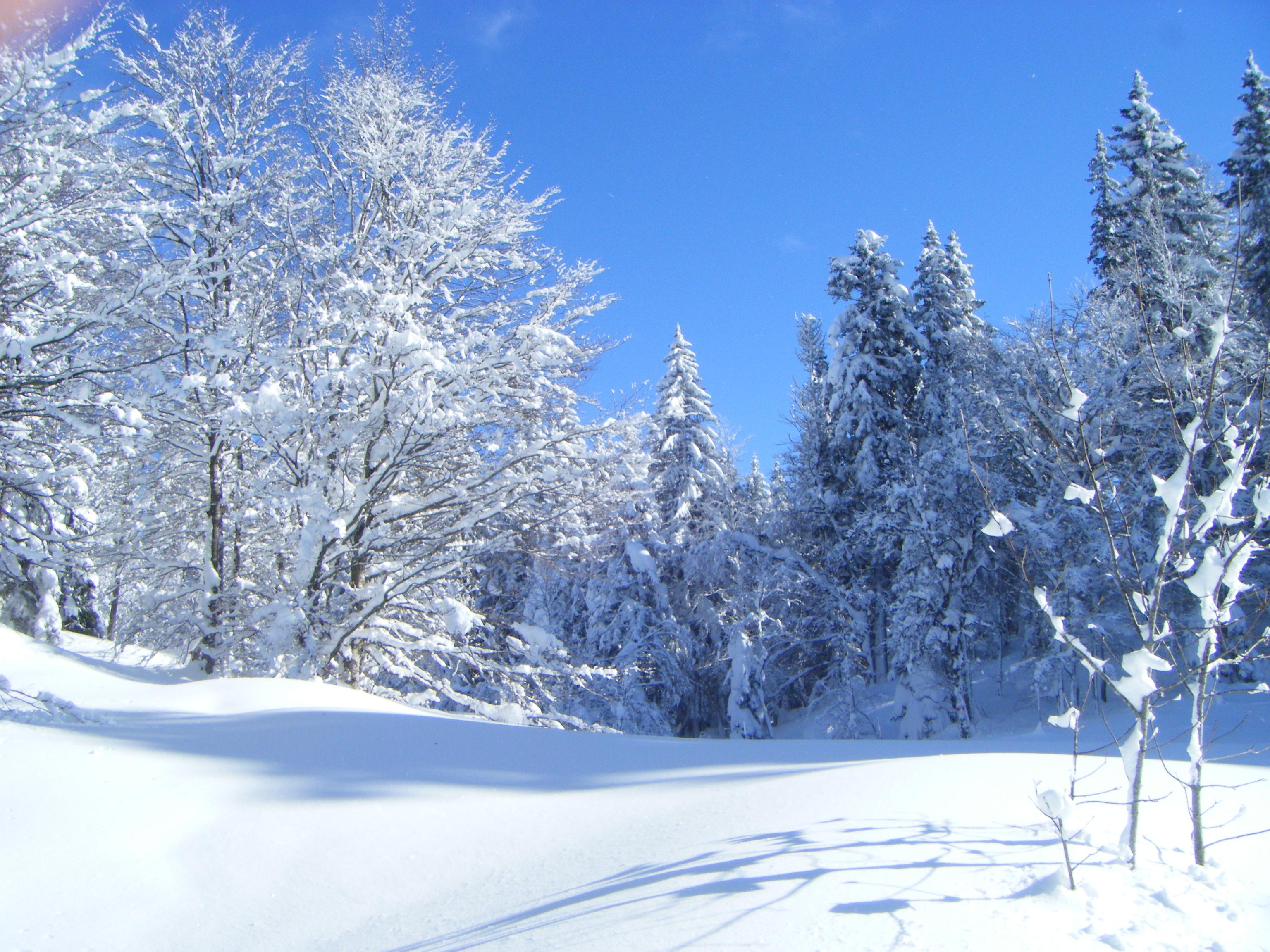 snow_1343324_82588502